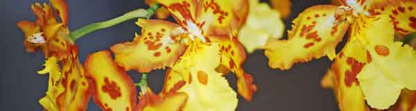 About orchids, orchid ebooks