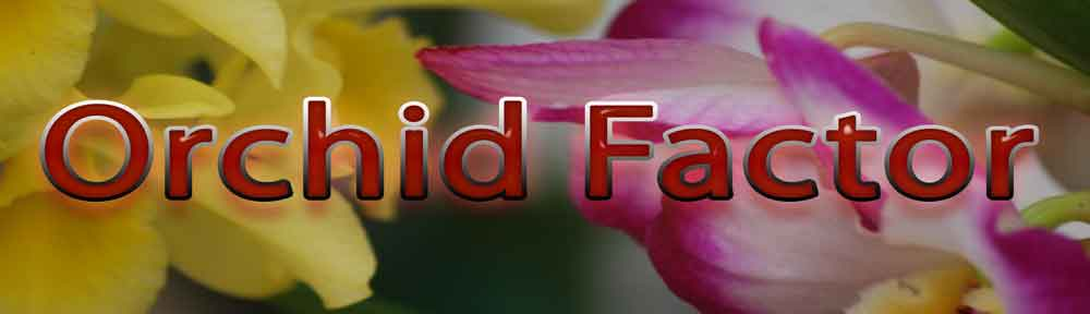 Orchids, Orchid plants, Orchid growers
